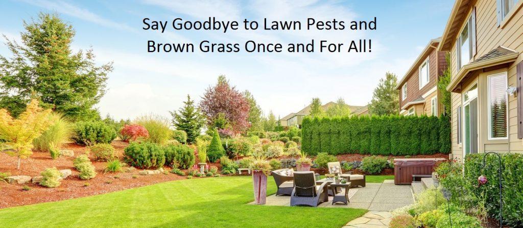 backyard lawn care treatment